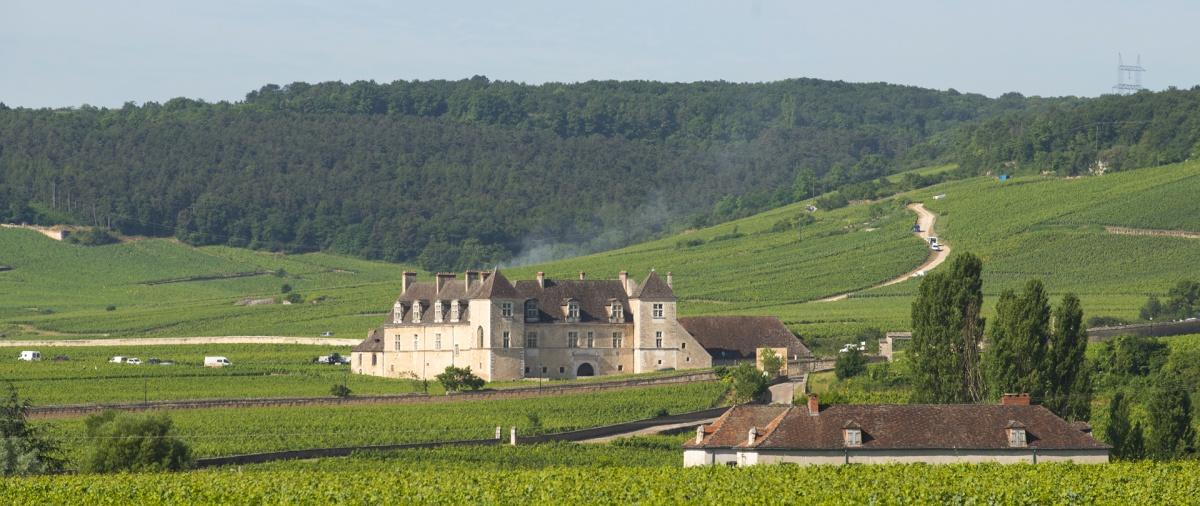 Vignoble du château du Clos de Vougeot